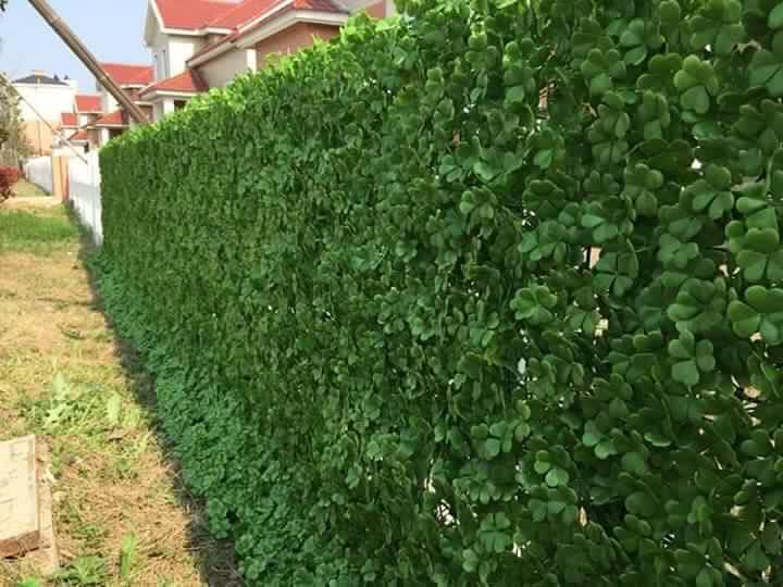 Artificial clover hedge privacy screening Gallery Image
