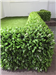 artificial floral hedge panels for garden fence, privacy wall and screening Gallery Thumbnail