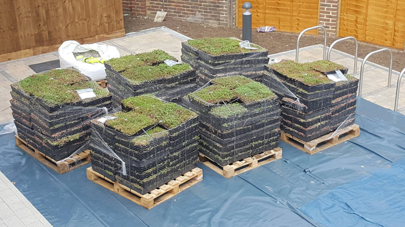 M-Tray® modular green roof supplied to site on pallets Gallery Image