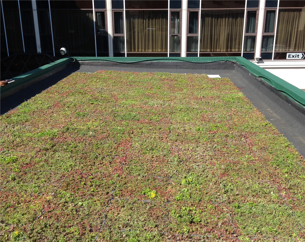 M-Tray® green roof Gallery Image
