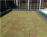 M-Tray® green roof Gallery Thumbnail