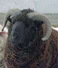 Sheep Wool Insulation Ltd Image